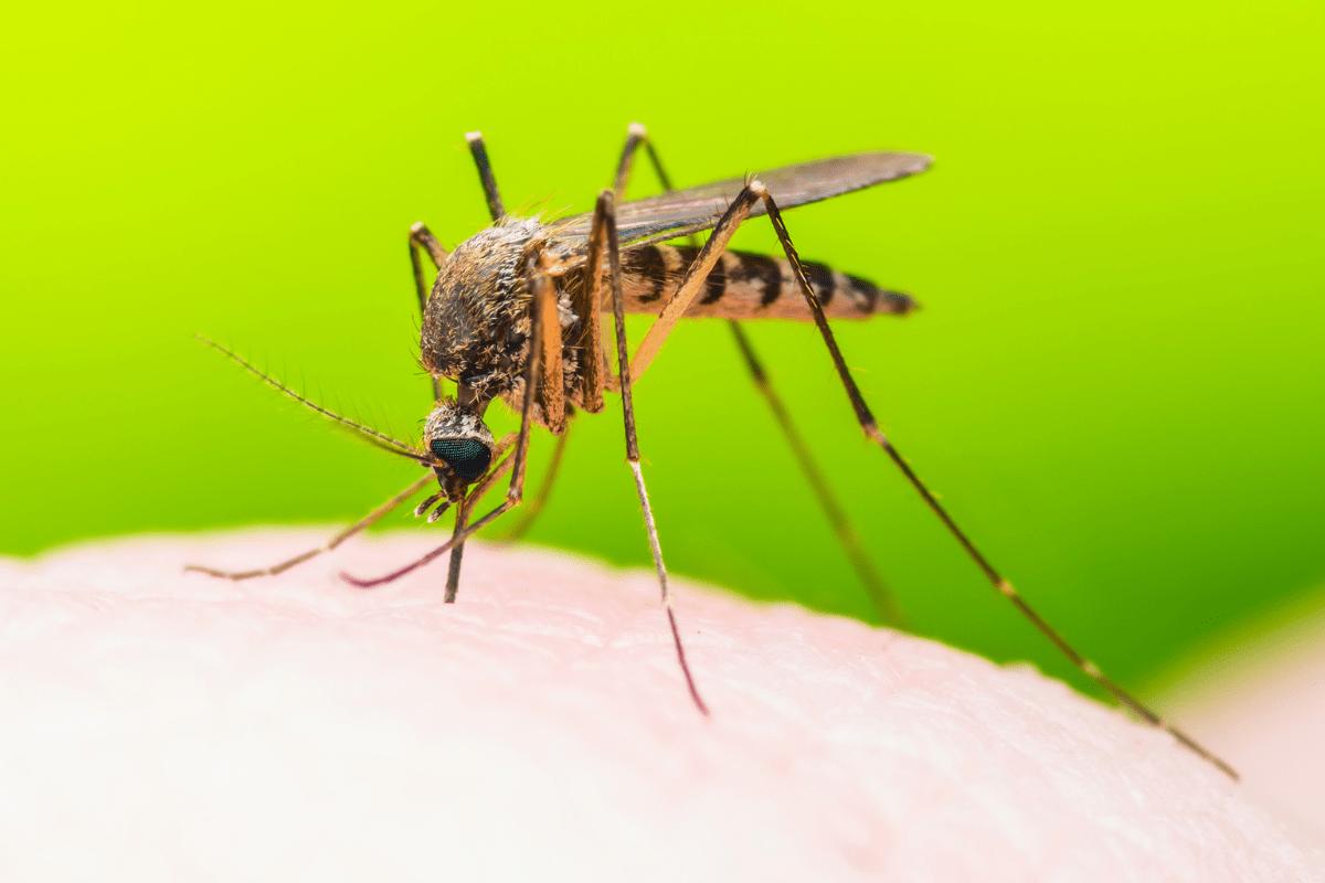 malaria prophylaxis dibden